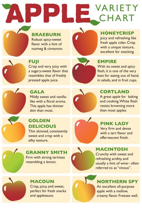 Apple Variety Chart, poster design for Brattleboro Food Co-op, VT. Digital illustration and typography.
